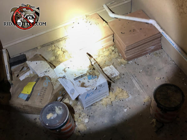 Rat droppings in the basement of a house in Atlanta among stored paint and floor tiles in boxes