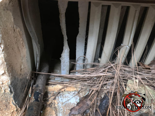 Rats chewed through the vertical slats of a plastic foundation vent cover
