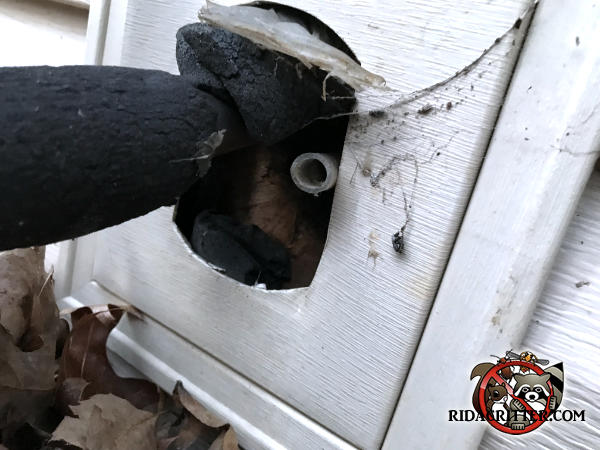 Gap between the air conditioning pipes and a hole in the siding of a house in Blairsville Georgia allowed rats into the house