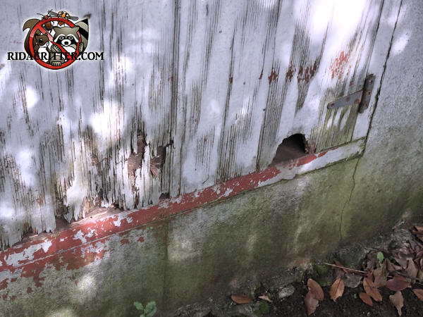 Dome shaped hole in a plywood crawl space door outside the house