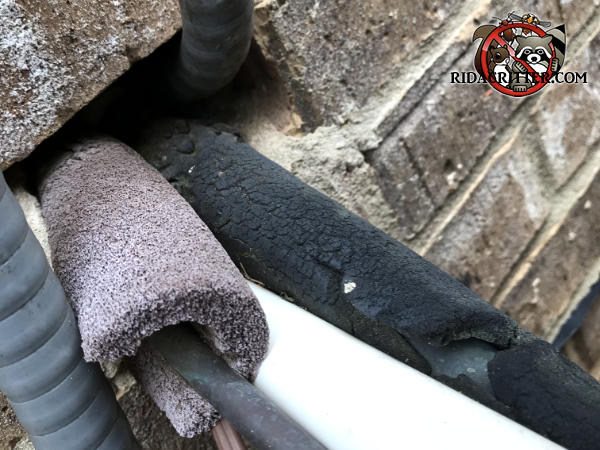 Air conditioning pipes and wires passing through a hole in the brick wall served as a bridge for Norway rats to climb into a house in Conyers Georgia