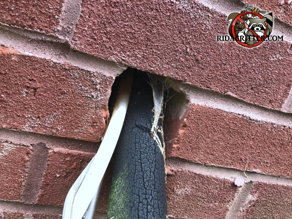 Unsealed hole used to pass pipes through the brick wall of a house in Covington Georgia allowed rats into the house