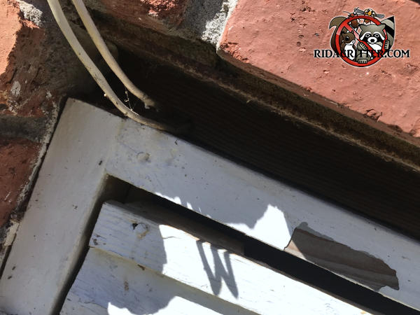 Two inch gap between the top of the crawl space door frame and the brick wall with wires passing through it allowed rats into the crawl space of a house in Clarkston Georgia