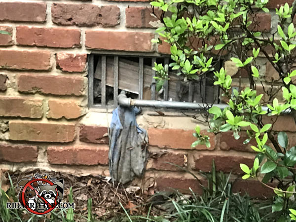 Rats got into a house in Dunwoody Georgia through a broken foundation vent with a pipe jammed through it.