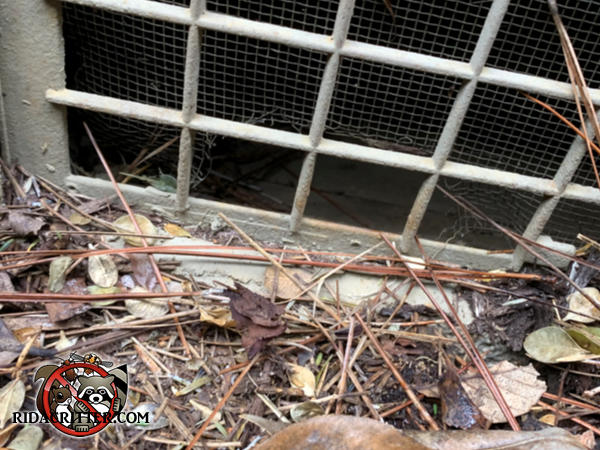 Rats gnawed through the screen behind a foundation vent to get into a house in Atlanta Georgia