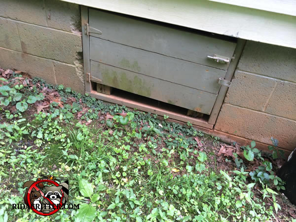 Rat removal and extermination in north georgia for Garage door repair canton ga
