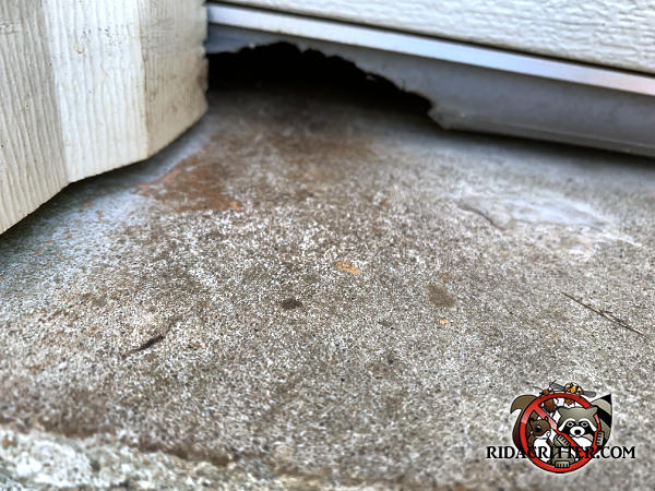 Rat chewed a hole through the rubber weather seal at the bottom of the garage door of a house in Dallas Georgia