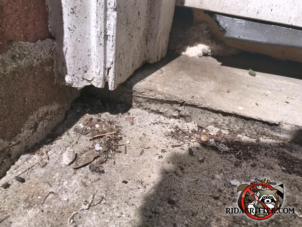 Rats gnawed their way through the weather strip at the bottom of the garage door