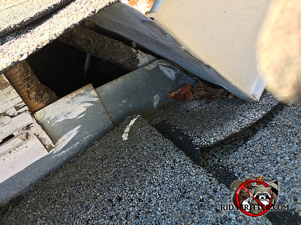 Rat Removal And Rat Proofing Metro Atlanta Marietta
