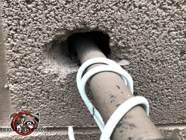 Gap around a pipe where it passes through an exterior wall allowed rats into a house in Eastman Georgia