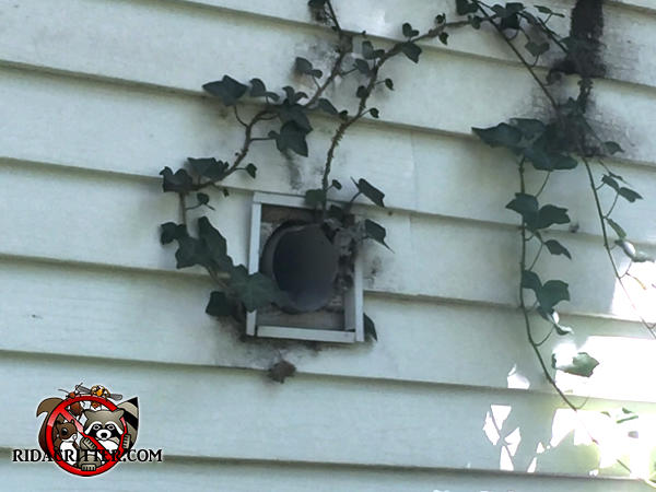 The exterior dryer vent hood is missing and allowed rats to get into a house in Hueytown Alabama