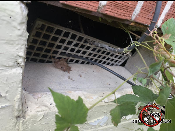 Heavy wires passed through the foundation vent of a house in Atlanta dislodged the vent cover from the foundation which allowed Norway rats to get into the house