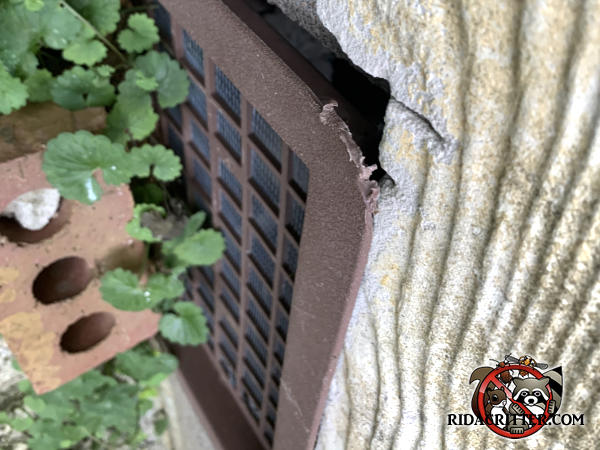 Rat gnawed at the corner of a plastic foundation vent to get into a house in Atlanta