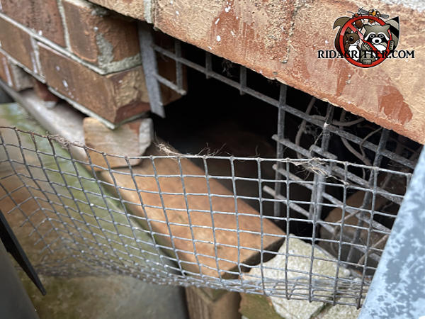 Rats pulled off the wire mesh that a homeowner loosely applied over a broken foundation vent to keep rats out of a Fortsyth Georgia home.
