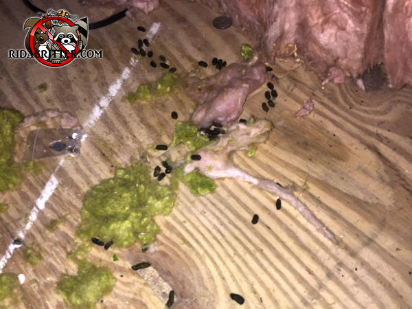 Rat droppings, plant debris, and shredded insulation on a plywood floor are evidence of a rat problem in a house in Birmingham Alabama
