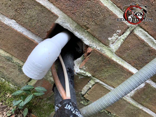 A brick was removed from the wall of an Atlanta home to pass pipes and wires through and rats got into the house through the gap.
