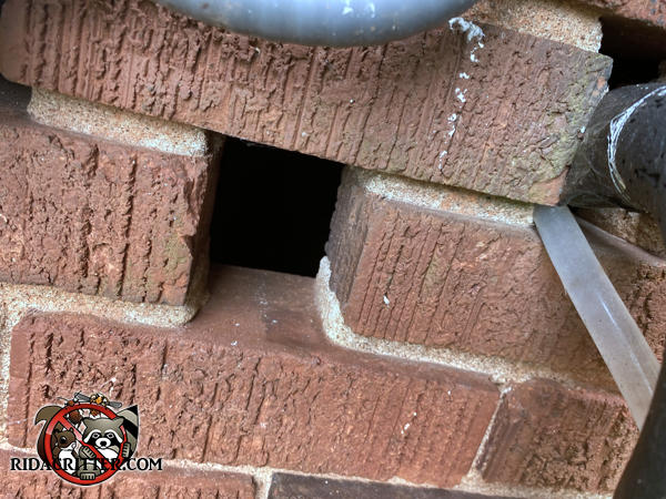 A roughly two inch square ventilation gap in the brick foundation needs to be closed to exclude rats from a Kennesaw Georgia home.