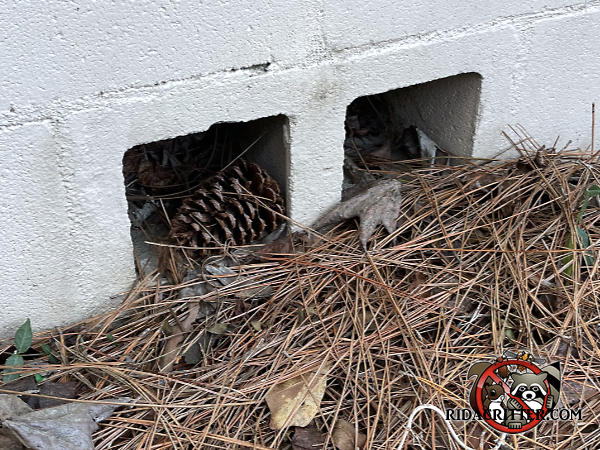 Lightening holes in a cinder block turned on its side need to be screened to keep Norway rats out of the crawl space of a Columbus Georgia home.