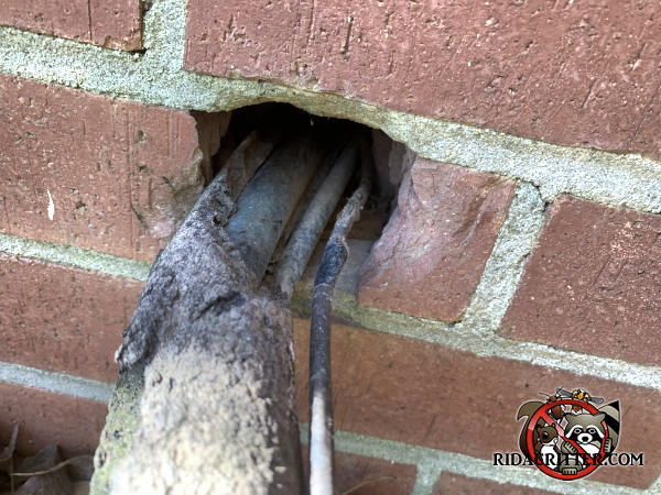 Gap around air conditioning pipes where they pass through the brick wall of a house in Fayetteville Georgia allowed rats into the house