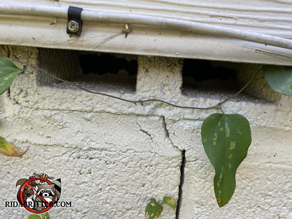 The lightning holes in a cinder block installed facing sideways as a vent hole allowed rats into the crawl space of a house in Atlanta.