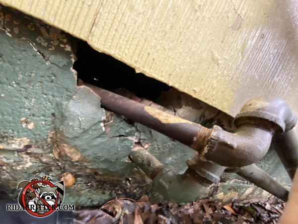 A gap of several inches between the foundation and sill plate where some pipes pass through needs to be sealed as part of an Atlanta rat control job.