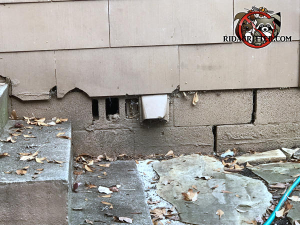 Vent holes in the bricks, a dryer vent, and multiple gaps between the cinder blocks at an Atlanta rat control and rodent exclusion job.