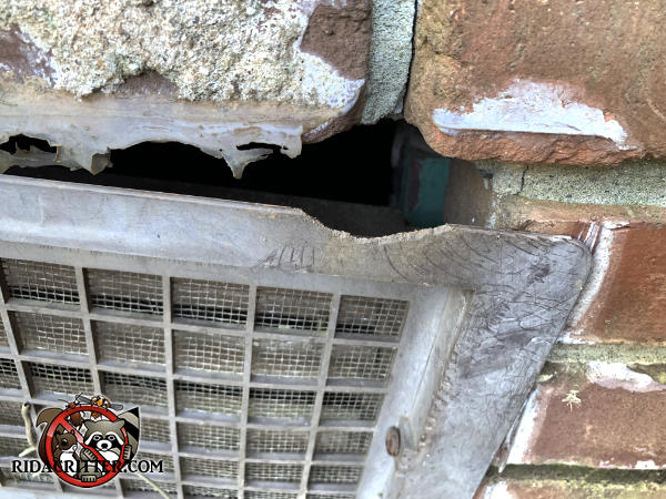 Rat gnawed a notch in a plastic foundation vent cover to get into a house in Atlanta