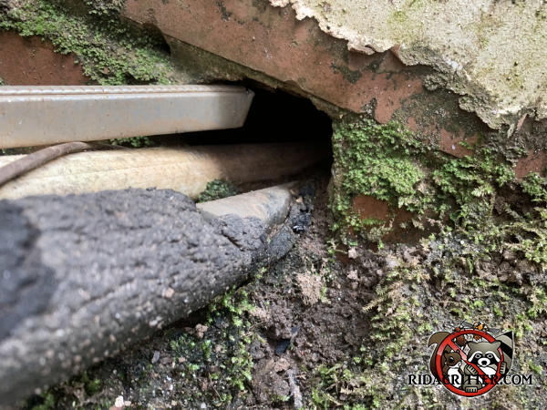 Two pipes were passed at ground level through a softball sized hole in the brick wall of a house in Athens Georgia and rats got into the crawl space through the gap