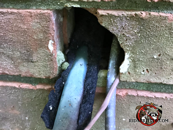 Hole in the brick wall of a house in Covington Georgia where pipes pass through has foam insulation and pipe insulation chewed away by rats