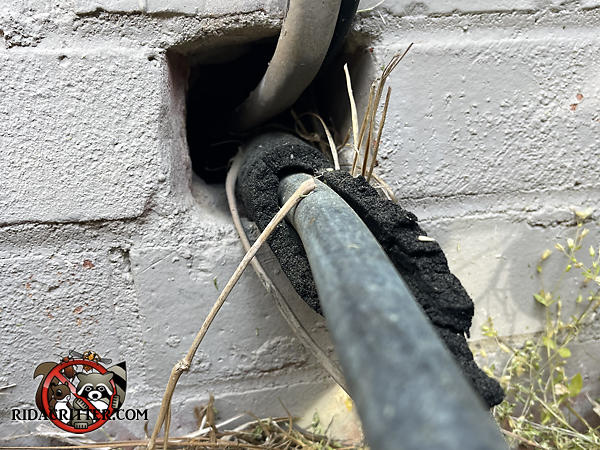 Gap around air conditioning pipes where they pass through a brick wall needs to be sealed to exclude Norway rats from a Johns Creek Georgia home.