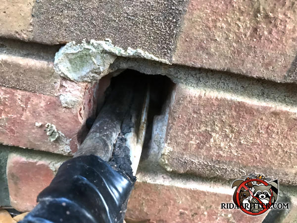 Norway rats got into a brick house in Hiram Georgia through a large gap around a pipe where it passes through the brick wall