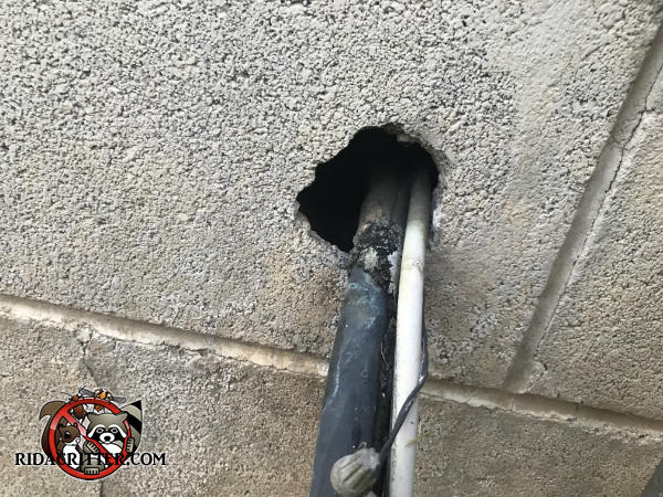 Baseball sized hole where pipes passed through the block foundation of a house in Cartersville Georgia allowed rats into the house