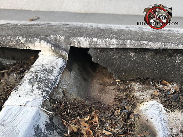Fist sized roof rat hole through a shingle at a junction point of a corrugated metal roof of a commercial building in Atlanta