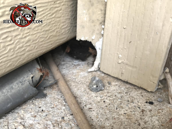 Norway rat hole in a garage door frame in Conyers Georgia