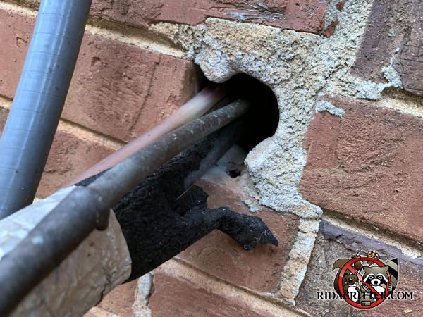 Two inch diameter hole through the bricks where air conditioning pipes pass through allowed Norway rats to get into a brick house in East Point Georgia