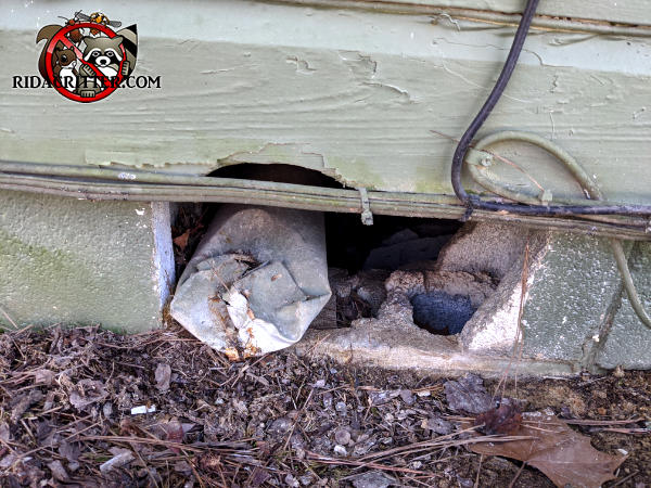 Ten inches of a cinder block is missing from the foundation of a house and must be repaired to keep Norway rats out of a Dunwoody Georgia home.