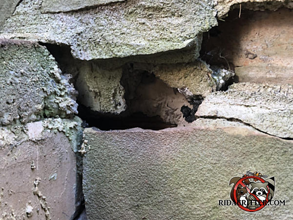 Gap in the rubble foundation of a house in Roswell Georgia allowed Norway rats to get into the house