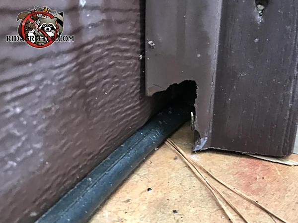 Rat chewed a hole through a garage door frame in Bremen Georgia