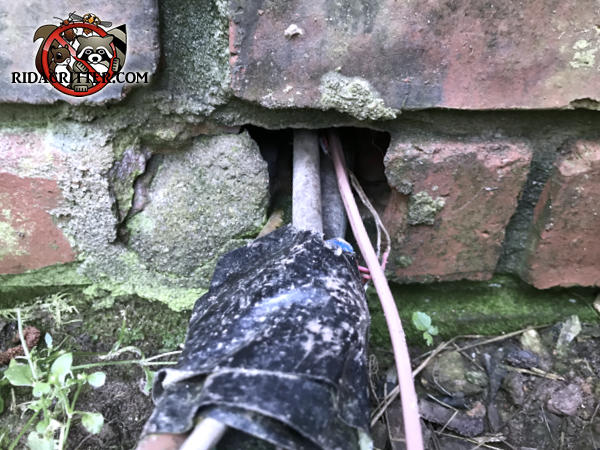 Gap in the bricks at ground level where the air conditioning pipes pass through a brick wall allowed rats into a house in Lilburn
