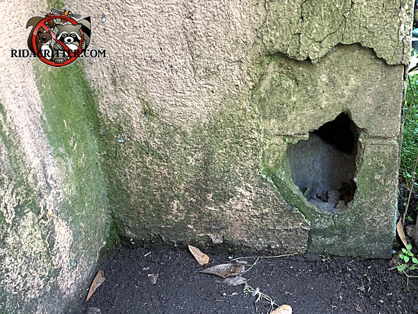 palm sized hole in a block foundation that rats used to get into a house in Macon Georgia