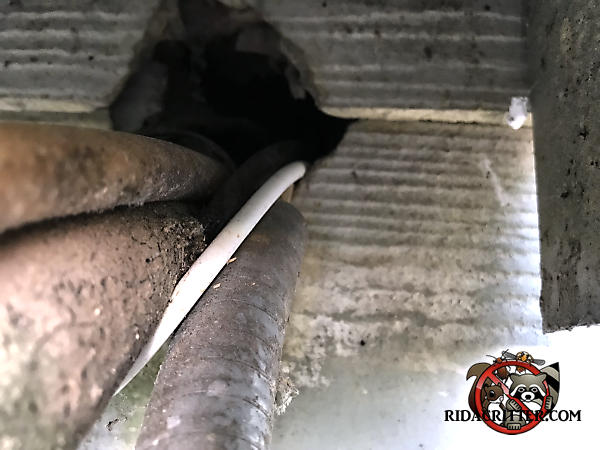 Gap around wires and pipes passed through the siding of a house in Soddy Daisy Tennessee allowed rats into the house