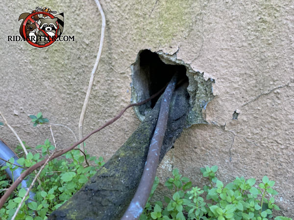 Baseball sized hole where pipes and wires pass through the wall of a house in Macon Georgia allowed rats to get into the house