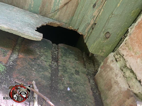 Rat hole chewed through the bottom of the wooden door leading into the basement of a house in Marietta Georgia