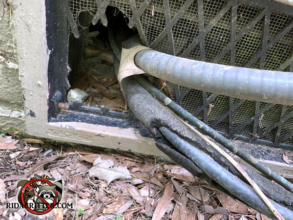 Rat chewed a three inch hole through the lower left corner of a plastic foundation vent at a house in Atlanta