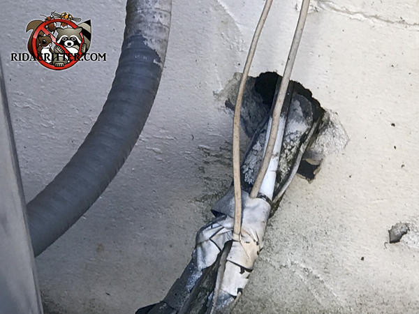 Large gap around air conditioning pipes passed through the foundation of a house in Snellville Georgia allowed rats to get in
