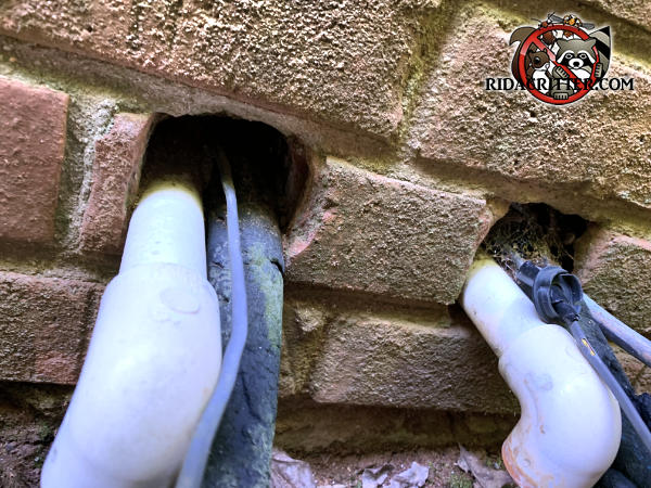 Rats got through two holes about four inches apart with pipes passing through them in the brick wall of a house in Bogart Georgia