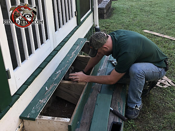Man sealing rats out of a wooden porch stairway with the top step removed at a house in Greenville Georgia