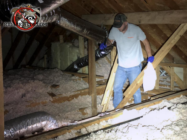 Technician in the attic of a house in Newnan Georgia inspecting for roof rats