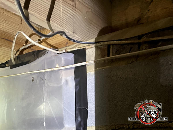 Greasy stains on wiring and the sill plate in the basement of an Albany Georgia home are evidence of a Norway rat infestation.