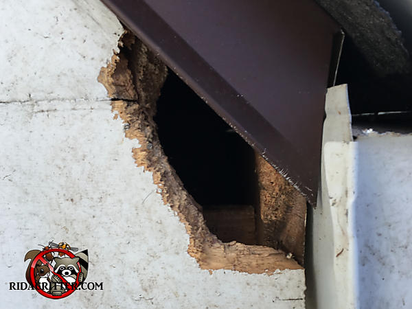 Roof rat hole chewed through the wooden trim and into the soffit of a house in Atlanta